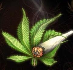 4466_marihuana-e1340992079267