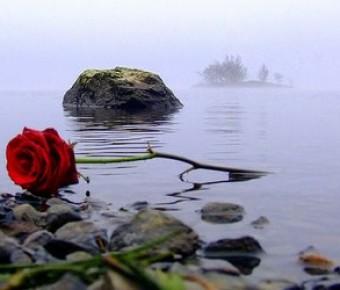 Una rosa en la playa…