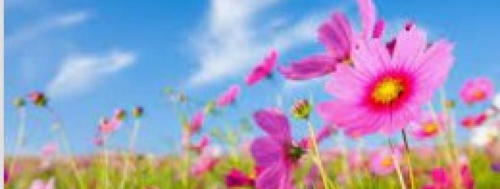 Las flores de la primavera
